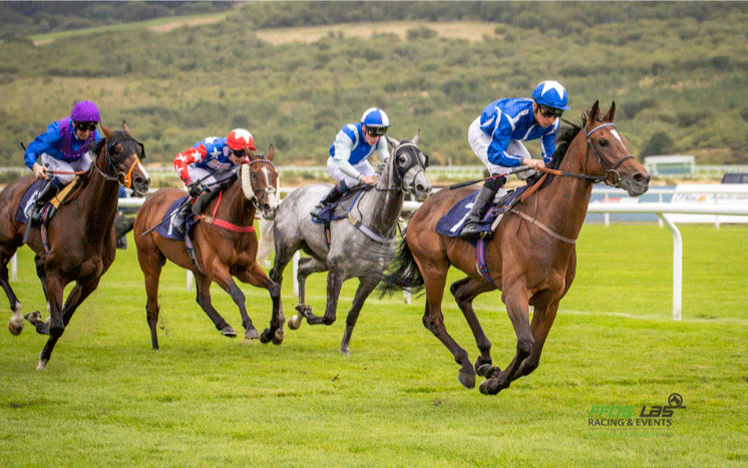 Horses Racing down the track at ffos las
